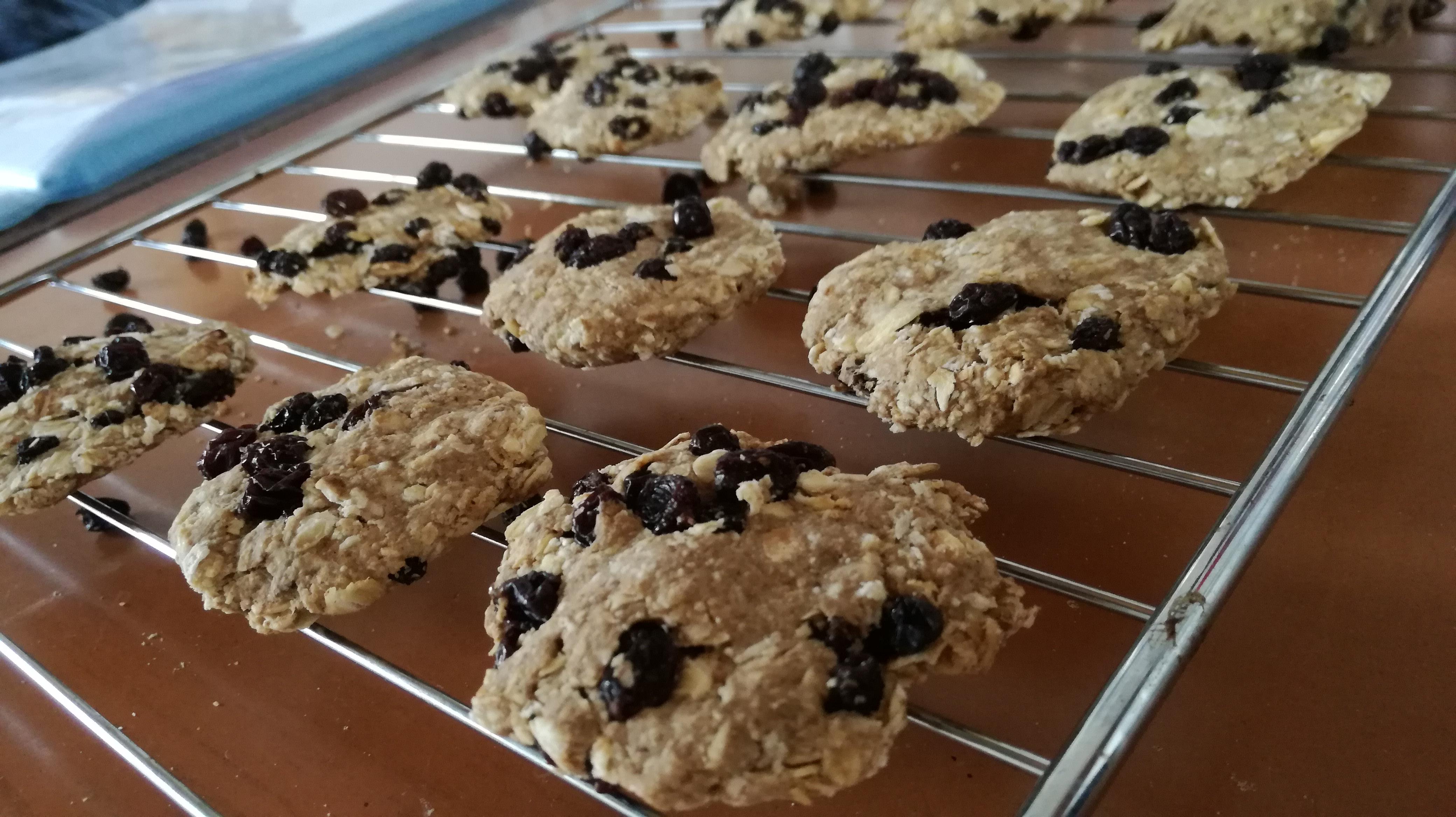 cookies aux raisons alignés sur grille de cuisson vegan et sans gluten médical médium compatible